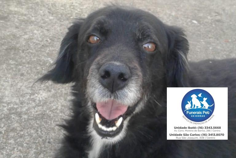 Homenagem do Funerais Pet ao cachorro Duque -