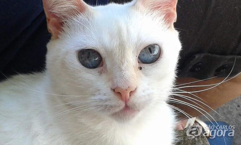 Homenagem a gatinha Lisa Maria -