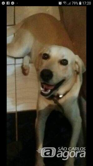 Homenagem a cachorro Marley -