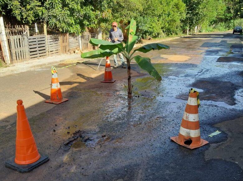 Moradores plantam bananeira próximo a vazamento de água - Crédito: Divulgação