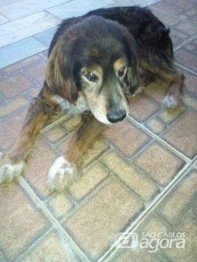 Homenagem ao cachorro Tobi. -