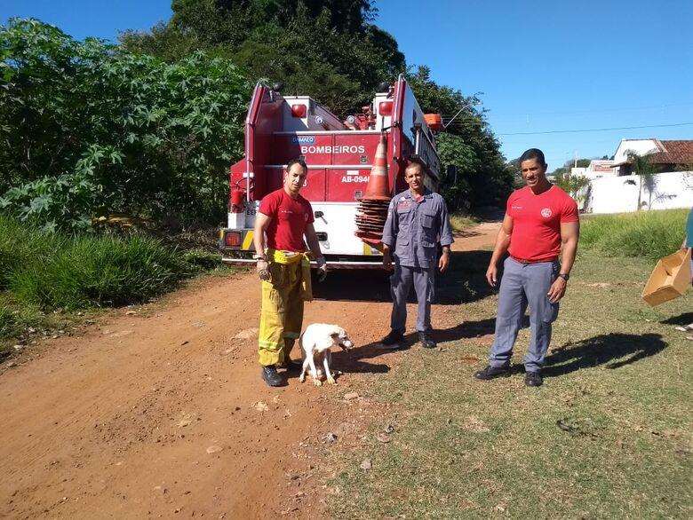 Bombeiros resgatam cão que caiu em buraco - Crédito: Divulgação