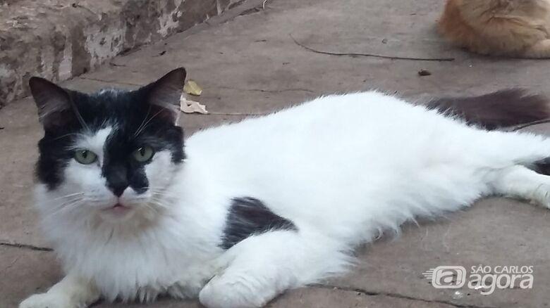 Homenagem a Gato João e gatinha Rebeca -
