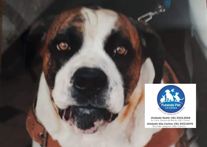 Homenagem da Funerais Pet ao cachorro Brusk -
