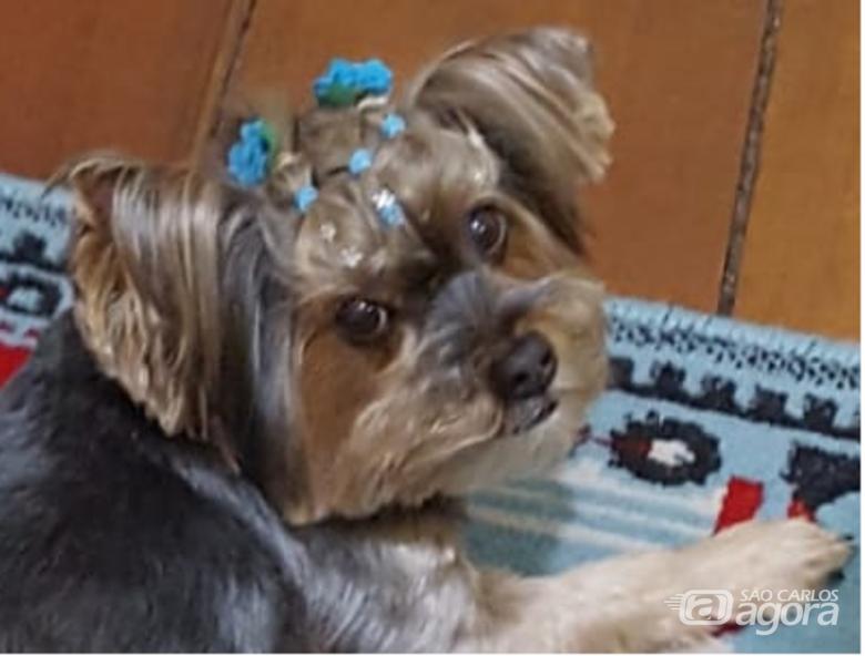 Homenagem a cachorrinha Leona e Dytinha -