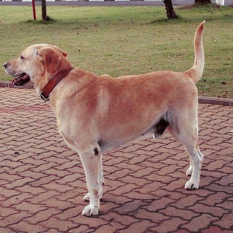 Homenagem ao cachorro Théo -