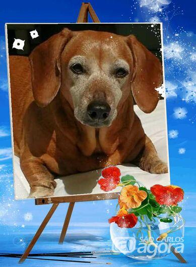 Homenagem da Funerais Pet a cachorrinha Molly -
