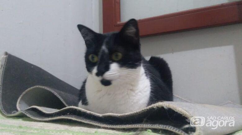 Homenagem da Funerais Pet a gatinha Tarsila -