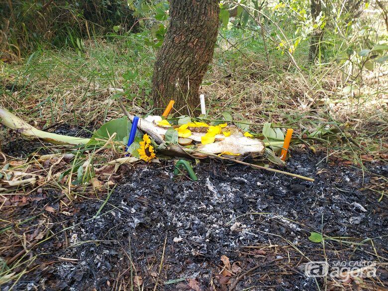 Oferenda pode ter causado incêndio em reserva florestal do Santa Felícia - Crédito: Abner Amiel/São Carlos Agora