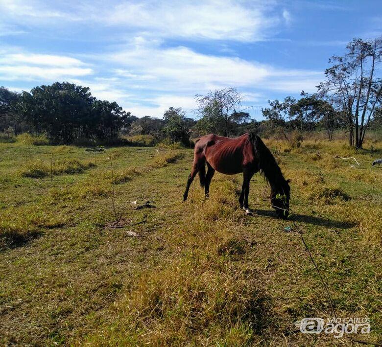 Secretaria de Serviços Públicos solicita retirada de animais de área de recuperação ambiental -