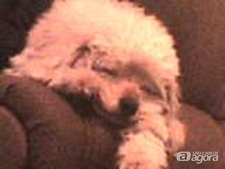 Homenagem da Funerais Pet ao cachorro Bob -