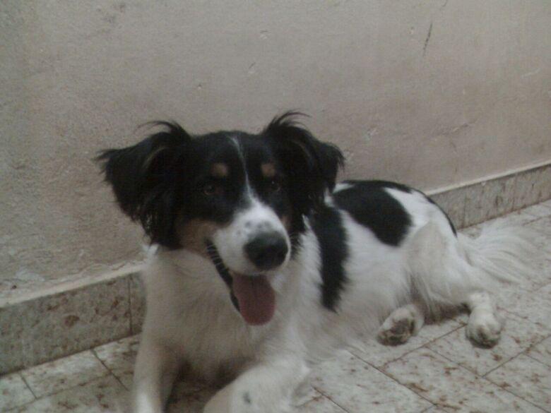 Homenagem do Funerais Pet ao cachorro Zequinha -