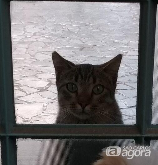 Homenagem da Funerais Pet a gatinha Sanfona -