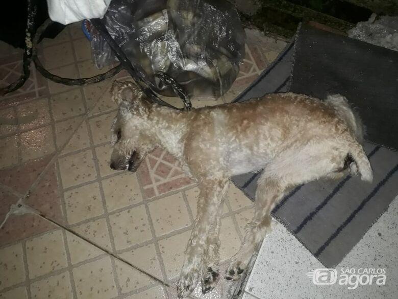 Final de semana é marcado pelo envenenamento de três cães em São Carlos - Crédito: Marcos Escrivani