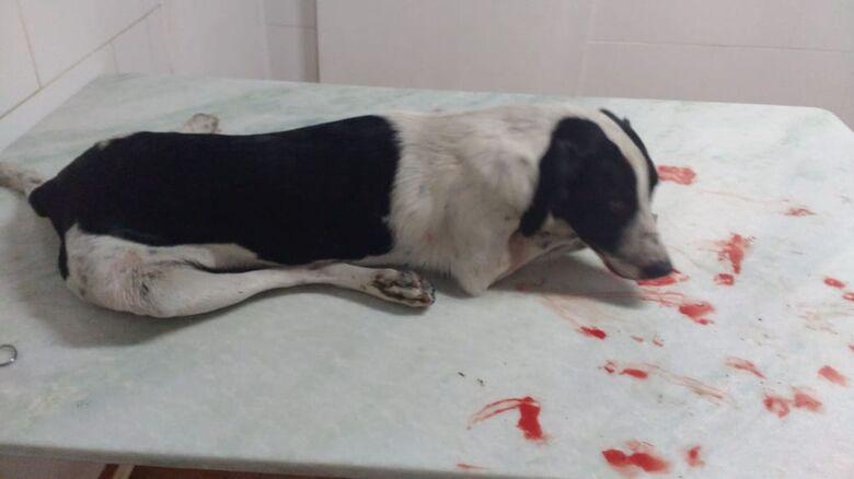 Cachorrinho morre após ser atropelado no Cidade Jardim - Crédito: Divulgação