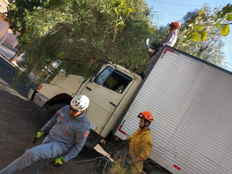 Árvore cai sobre caminhão no Centro - Crédito: Luciano Lopes