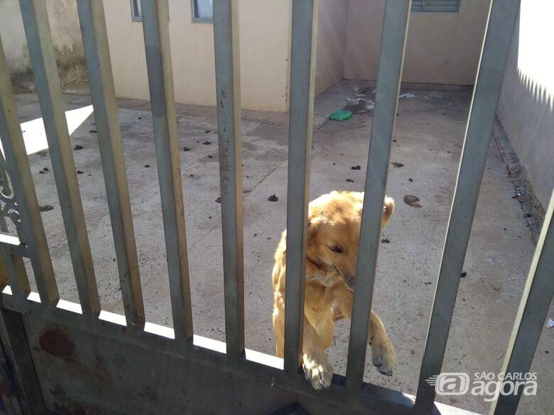 Defesa Animal resgata cachorro vítima de maus tratos -