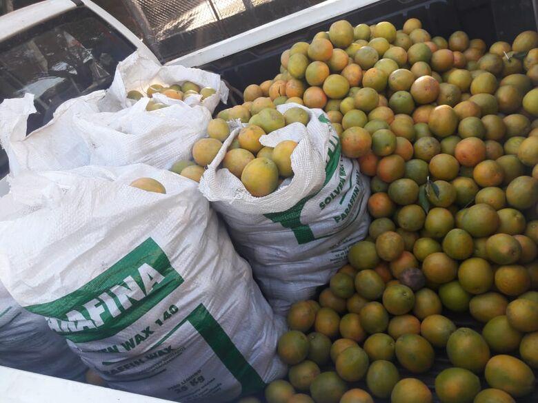 Ladrão furta laranjal em Brotas e é detido em São Carlos - Crédito: Maycon Maximino