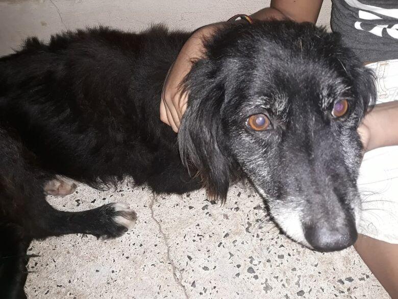 Mais um cachorrinho é vítima de envenenamento no Zavaglia - Crédito: Divulgação