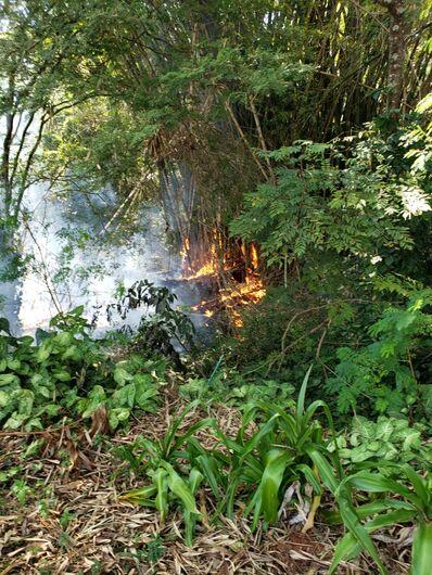 Bambuzal pega fogo em praça abandonada no Munique - Crédito: Divulgação