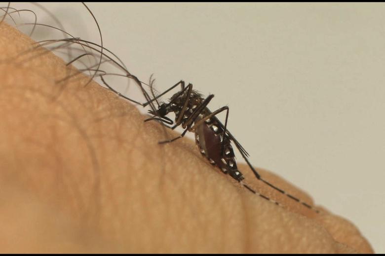 São Carlos registra 1.563 casos de dengue - Crédito: Divulgação