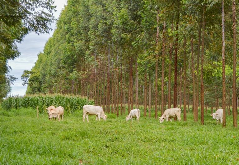 Para pesquisador da Embrapa São Carlos, bem-estar animal impacta na produtividade de carne e leite - Crédito: Gisele Rosso