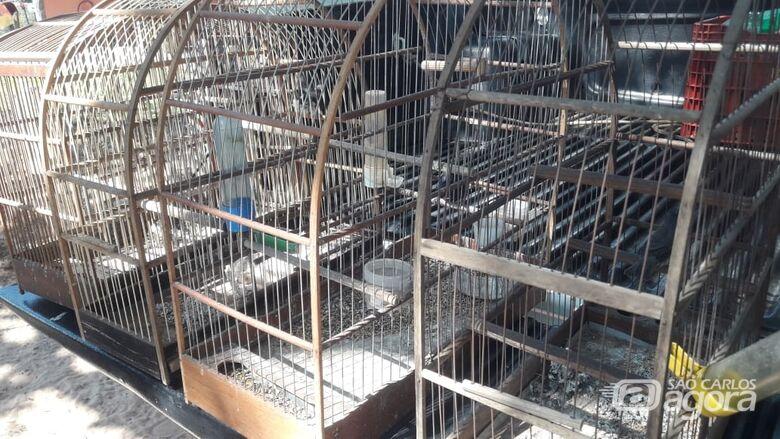 Homem é detido por manter presos pássaros silvestres em Torrinha - Crédito: Divulgação