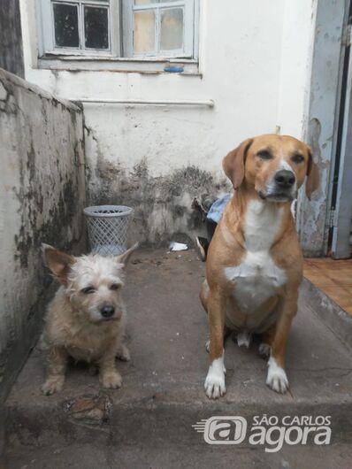 Faxineira tem luta diária para alimentar animais abandonados - Crédito: Divulgação