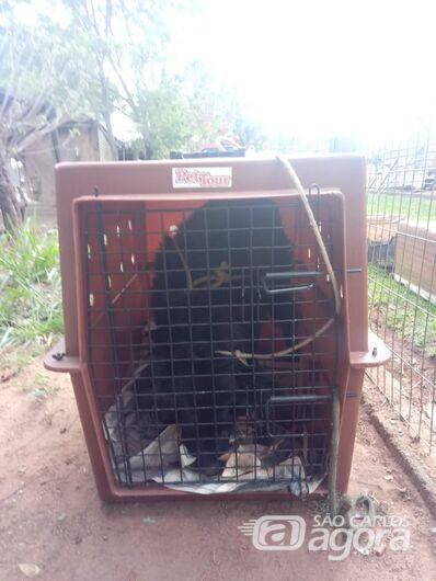 Cão que estava abandonado no CDHU é resgatado pelo Departamento de Defesa Animal - Crédito: Divulgação