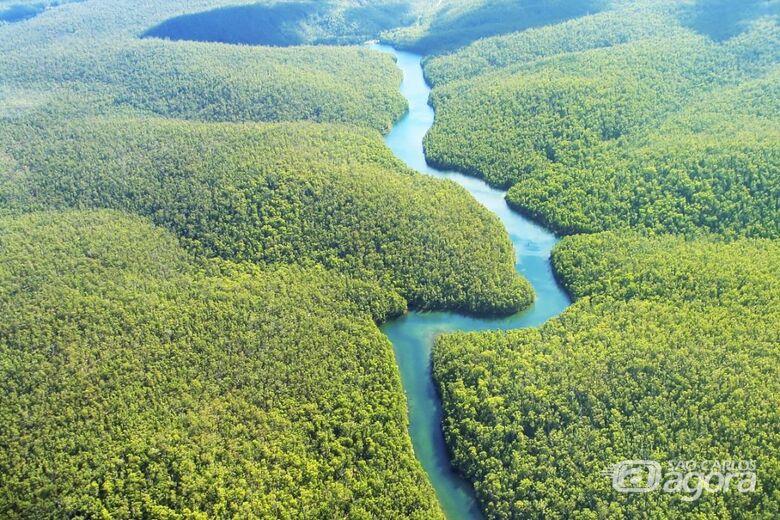 """""""A Amazônia e o nosso futuro"""" no Ciência às 19 Horas - Crédito: Divulgação"""