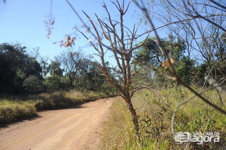 Após ataque de onça, UFSCar solicita que sejam evitadas visitas ao Cerrado - Crédito: Arquivo/SCA