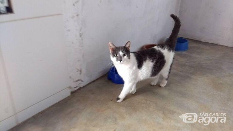 Homenagem da Funerais Pet a gatinha Margo -