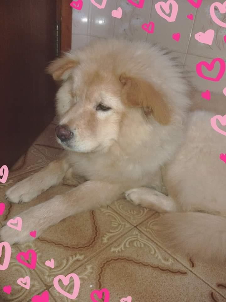 Homenagem da Funerais Pet a cachorrinha Cristal -