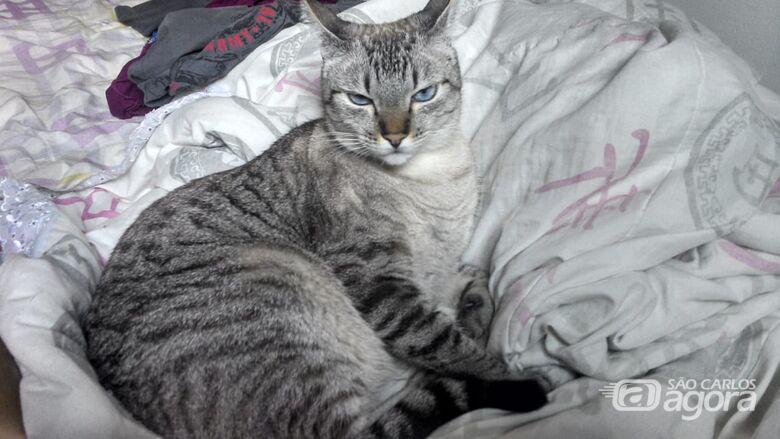 Homenagem da Funerais Pet a gata Loirinha -