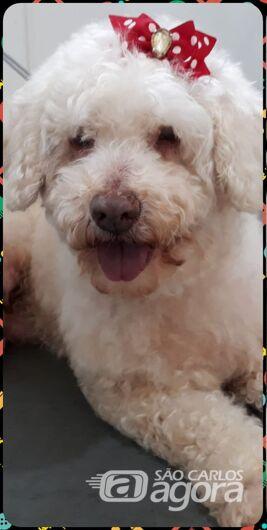 Homenagem Funerais Pet a cachorrinha Glenda -