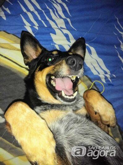 Homenagem Funerais Pet ao cachorrinho Nico -
