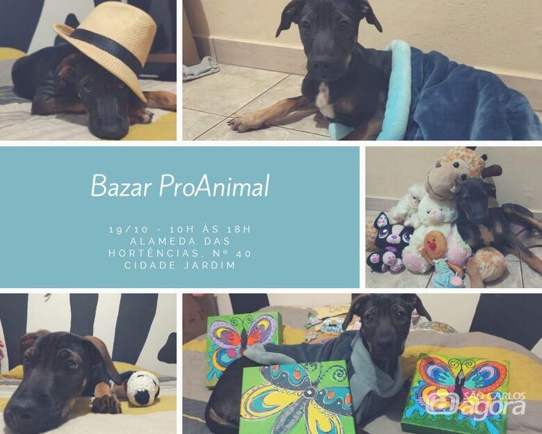 Bazar beneficente irá ajudar animais abandonados e vítimas de maus-tratos - Crédito: Divulgação