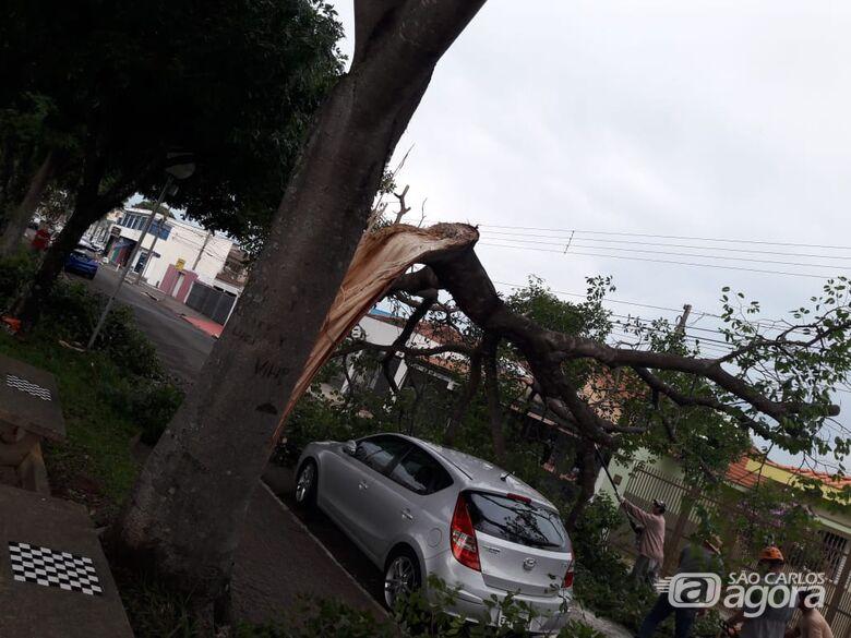 Árvore de grande porte cai e danifica três veículos na rua Larga - Crédito: Maycon Maximino
