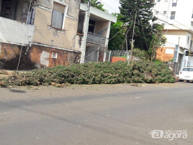 Pinheiro despenca na rua Major José Inácio - Crédito: Maycon Maximino