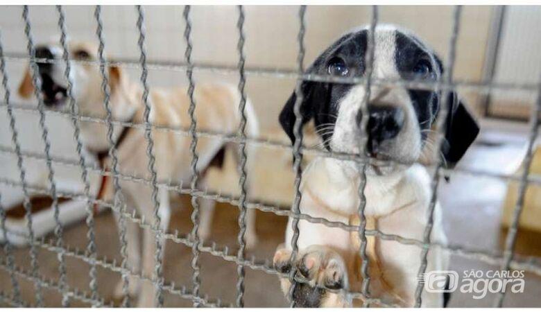 Senado deve votar projeto que proíbe sacrifício de animais de rua - Crédito: Fabio Rodrigues Pozzebom/Agência Brasil