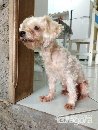 Homenagem da Funerais Pet a cachorrinha Chiara -