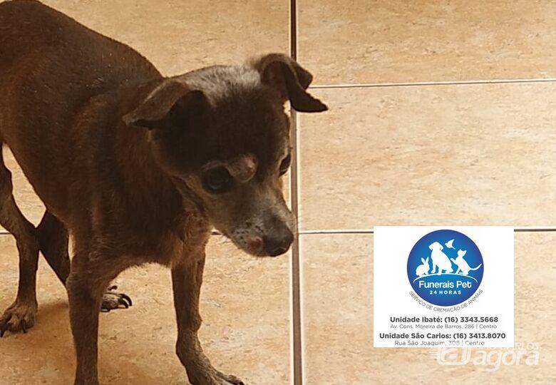 Homenagem da Funerais Pet ao cãozinho Negão -