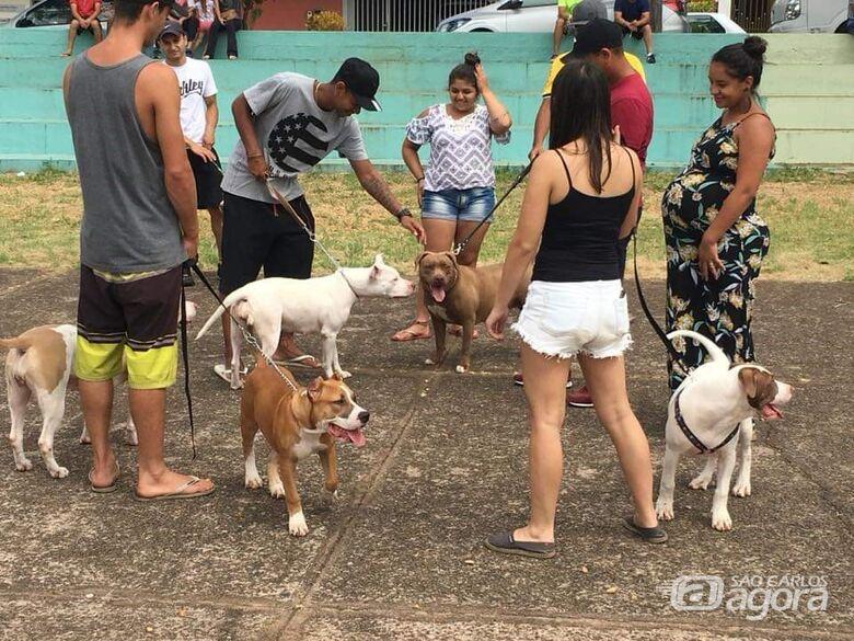 6º Encontro de Pit Bulls acontece neste domingo no Parque do Kartódromo - Crédito: Divulgação