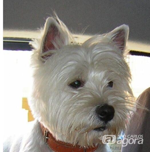 Homenagem da Funerais Pet a cachorrinha Nina - Crédito: Divulgação