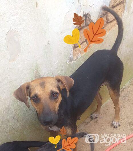Homenagem Funerais Pet a cachorrinha Filó -