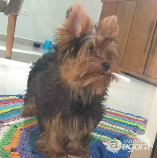Idoso pega cachorrinho no Douradinho e some; família busca informações - Crédito: Divulgação