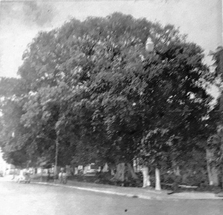O dia em que a cidade se despediu de sua árvore mais querida - Crédito: Arquivo Pessoal