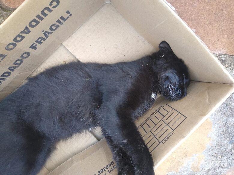 Gatos podem ter sido envenenados no centro - Crédito: Divulgação