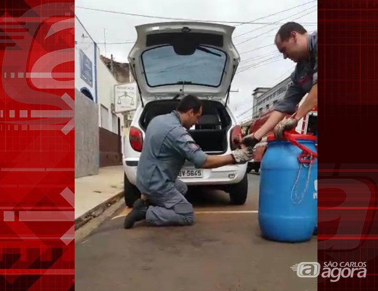 Bombeiros capturam cobra escondida em para-choque de carro no Centro; ASSISTA - Crédito: Reprodução