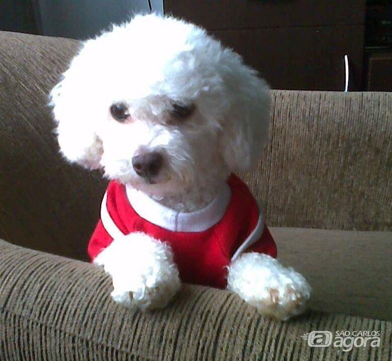 Homenagem da Funerais Pet a cachorrinha Emily -